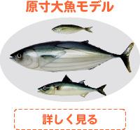 原寸大魚モデル
