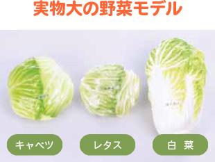 野菜の加熱前後の変化モデル